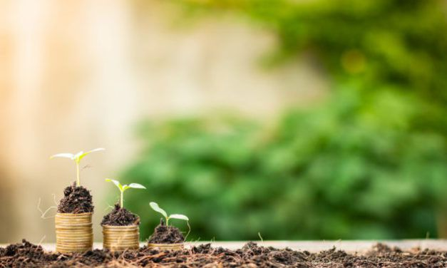 How risky is investing in Seed EIS investments?
